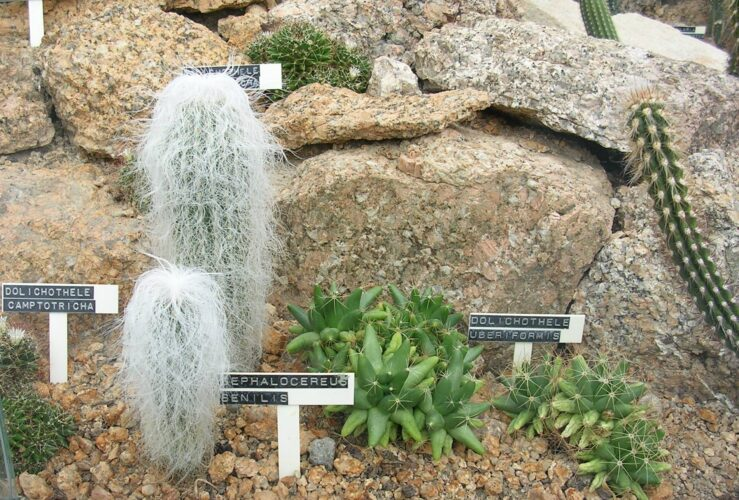 Ces plantes qui auraient voulu faire autre chose de leur vie